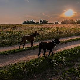 Naplemente kutyákkal by Sparas Klára - Animals - Dogs Running