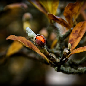 Autumn's fruit by Delia Galhotra - Nature Up Close Other plants ( plant, orange, digiphotography, season, tree, nature, autumn, seed, brown, leaves )
