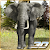 African Elephant Hunter file APK Free for PC, smart TV Download