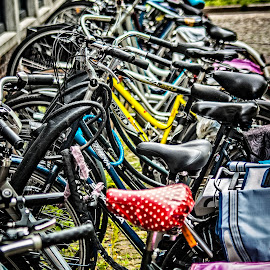 All in a Row 2 by Wayne Harlech-Jones - Transportation Bicycles ( colour, abstract, bicycles, colourful, colorful, color, transport, line, row, bicycle,  )