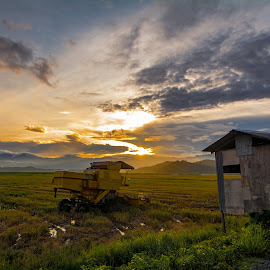 Sunrise after the rain by Ted Khiong Liew - Landscapes Sunsets & Sunrises ( clouds, field, rice field, green, sunrise )