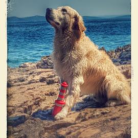 Winston by Saša Dolački - Animals - Dogs Portraits