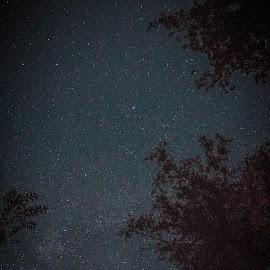 Star Gaze by Emily  Wilder - City,  Street & Park  Night