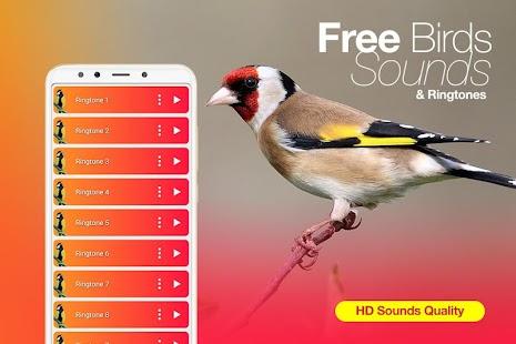 Best Birds Ringtones & Bird Sounds 2020