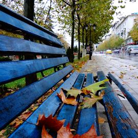by Dritan Zaimi - City,  Street & Park  Street Scenes