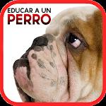 Cómo Educar a un Perro Icon