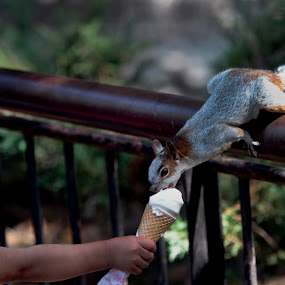 Girl and squirrel by Cristobal Garciaferro Rubio - Babies & Children Children Candids ( girl, ice cream, etaing, ice cream cone, squirrel )