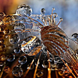A  Moment Of Peace by Marija Jilek - Nature Up Close Natural Waterdrops