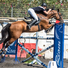 Jump by Ronen Rosenblatt - Animals Horses ( champion, rider, obstacle, horse, race, jump )