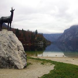 Autumn at Lake by Anuška Vončina - Landscapes Waterscapes ( nature, autumn, lake, landscapes, bohinj )
