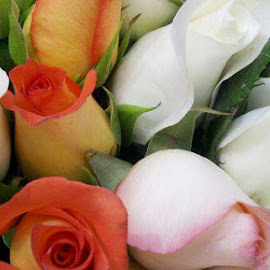 A bunch of roses by Linda Brown - Nature Up Close Gardens & Produce