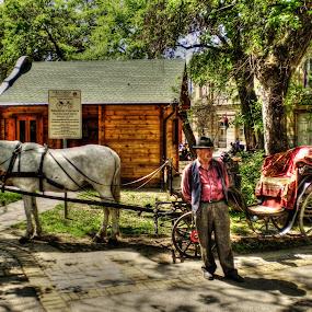 Fijaker by Zeljko Secujski - Animals Horses