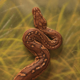 Snaky by Debi Ray - Animals Reptiles