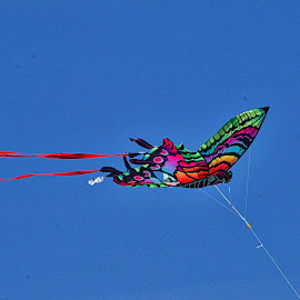 Kite in flight by Jim Antonicello - Artistic Objects Other Objects ( sky, kite )