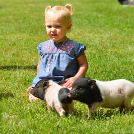 Vannie & Co. by Stacey Legg - Babies & Children Children Candids ( farm, piglets, baby, toddler, pig )
