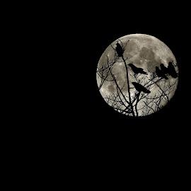 Moon and Crows by Steve Boer - Digital Art Things