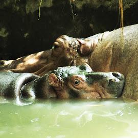 mommy by Aldicke Akbar - Animals Other Mammals