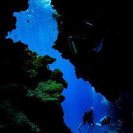 sharm_uw4 by Emanuele Pola - Animals Sea Creatures ( nauticam, underwater, sharm el sheikh, diving, olympus )