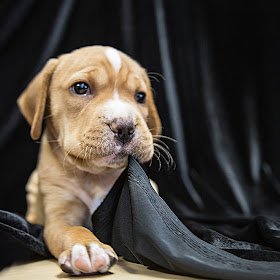 puppy no name.jpg