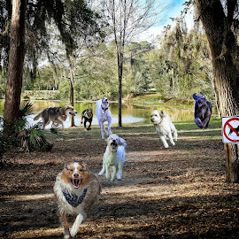 The Chase! by Sandy Scott - Digital Art Animals ( pets, pond, signs, humor, nature, dogs, canine, animals, running dogs, trees, landscape, digital art )