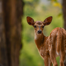 You called me? by Anand Lakshmi Kanthan - Animals Other Mammals