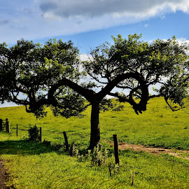 Tree symbol of infinity - Pardinho SP Brazil  by Marcello Toldi - Nature Up Close Trees & Bushes