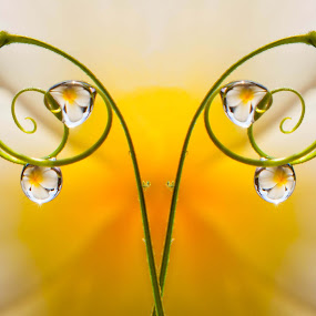 lovely by Muhamad Firman - Abstract Macro