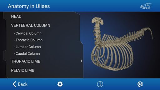 Osteology in Dogs - screenshot