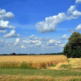 by Keri Stephenson - Landscapes Prairies, Meadows & Fields