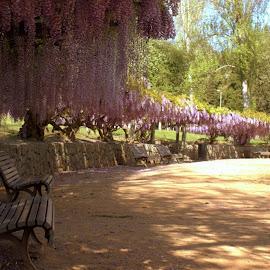 Spring by Patrícia Silva - Nature Up Close Gardens & Produce