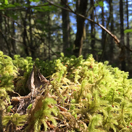 Moss on top of stump by Wendy Cooley - Nature Up Close Other plants ( stump, green, moss, forest, sun,  )