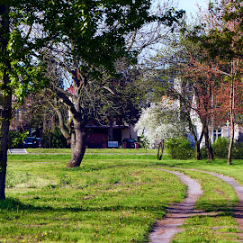 04. Maj w parku zdrojowym by Marek Rosiński - City,  Street & Park  City Parks ( boulevard, tree trunk, field, park bench, grass, bush, garden path, trees, lawn, park, footpath )