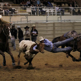 Steer Wrestling by Mandy Harvey - Sports & Fitness Rodeo/Bull Riding ( steer wrestling, horseworld, australia, rodeo, action, photography )