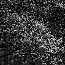 Balloon  by Todd Reynolds - Black & White Flowers & Plants