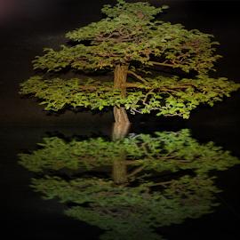 tree with reflections by LADOCKi Elvira - Digital Art Things ( tree )