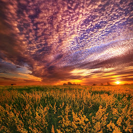 For Some A Way To Feel by Phil Koch - Landscapes Prairies, Meadows & Fields ( vertical, farmland, yellow, leaves, love, sky, nature, tree, weather, flowers, light, wild, orange, country   living, twilight, art, agriculture, horizon, horizo  ns, portrait, dawn, season, serene, trees, lines, earthenvironment, hope, inspirational, natural light, wisconsin, ray, joy, perspe  ctive, beauty, landscape, phil koch, spring, sun, photography, farm, life, country life, horizons, inspired, clouds, office, purple, park, heaven, beautiful, scenic, morning, shadows, field, red, blue, sunset, amber, peace, meadow, summer, beam, sunrise, garden,  )