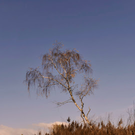 One commonly tree by Andrija Vrcan - Landscapes Travel ( tree, autumn )