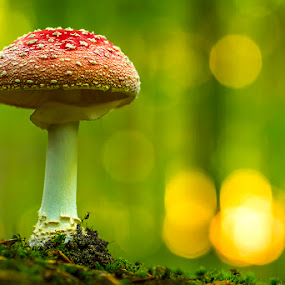 The perfect one by Peter Samuelsson - Nature Up Close Mushrooms & Fungi (  )