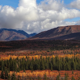 Autumn In Alaska by Patricia Phillips - Landscapes Travel