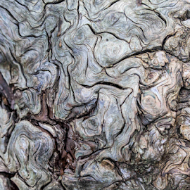 Burl by Michael Buffington - Nature Up Close Other Natural Objects ( detail, environment, wooden, nature, tree, wood, natural, burl )
