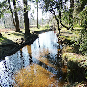 Forest Brook by Andrea Clayton - Novices Only Landscapes ( water, trees, forest, landscape )