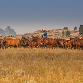by Erin Schwartzkopf - Animals Horses ( ranch, cowgirls, ranching, horses, wyoming, horse, western,  )