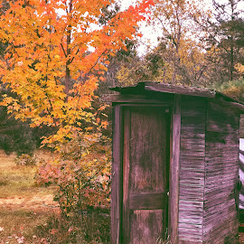 The outhouse by Patti Pappas - Buildings & Architecture Decaying & Abandoned ( orange, 2018, fall, michigan, tree, outhouse, october )