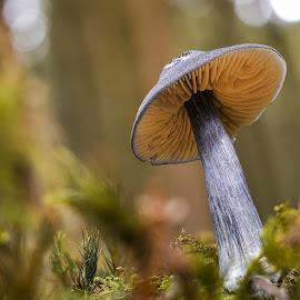Pilz by Helmut Gloor - Nature Up Close Mushrooms & Fungi ( mushroom, macro, nature, macro photography, wald, nature up close, forest, close up )