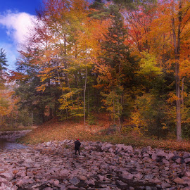 Autumn in the park by Morris Fremar - City,  Street & Park  City Parks