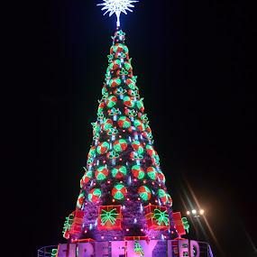 FIREFLY LED CHRISTMAS TREE by Cristian Jay Pareja - Public Holidays Christmas