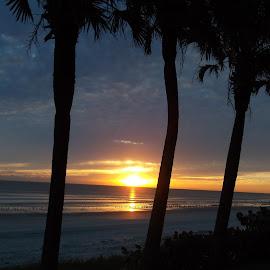 Sunrise in Daytona by Roxane Thompson - Landscapes Beaches ( daytona beach, palm trees, sunrise, spring break, beach front,  )