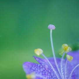Tiny Flower by Guy Shultz - Nature Up Close Other plants ( macro, pistil, dew, stamen, flower )