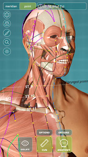 Visual Acupuncture 3D - Human - screenshot