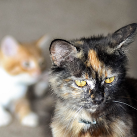 Mom and kitten by Stephen Fouche - Animals - Cats Portraits (  )